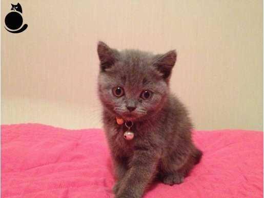 2 aylık kedi yavrusu3