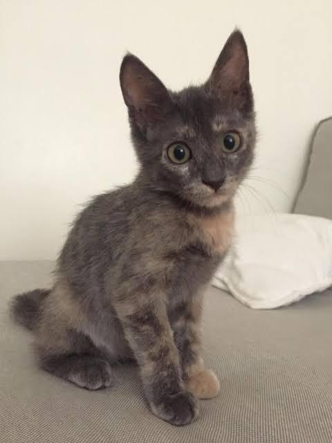 3 aylık kedi yavrusu3